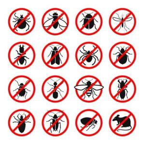 انواع الحشرات بمنطقة الرياض
