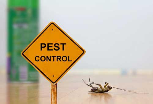 شركة مكافحه حشرات بالدمام